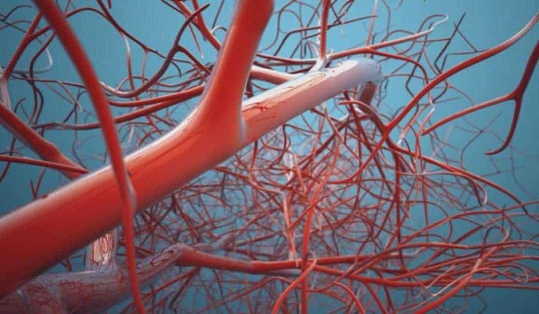 L'imprimante 3D chinoise pour vaisseaux sanguins | euronews, science